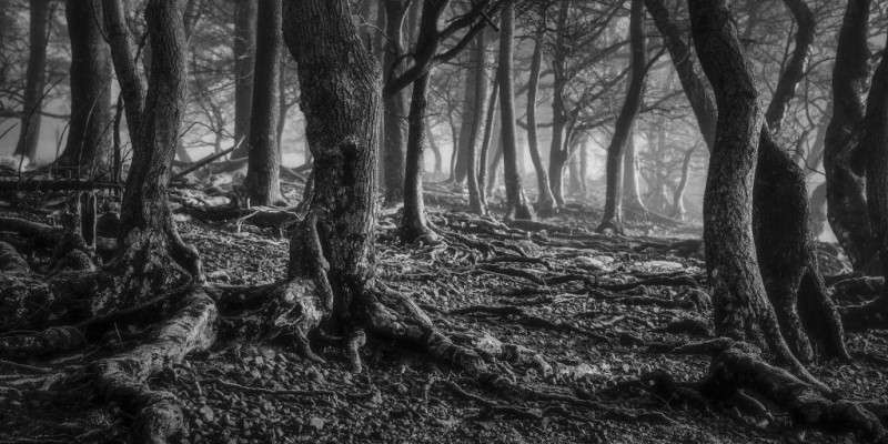 Secret Life of Trees - With kind permission by Mark Littlejohn